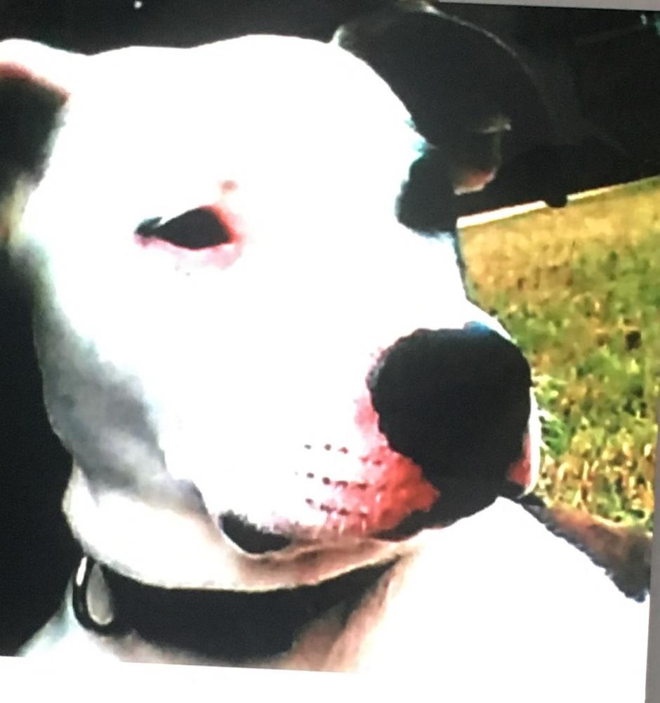 lost female dog last seen hwy 29 jones county ms 39437