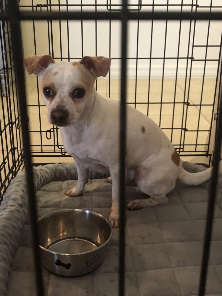 Found/Stray Male Dog last seen Near SW 78th Ave & SW 6th Ct, Plantation, FL 33324