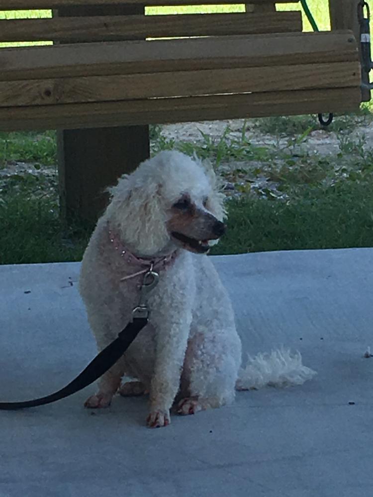 Lost Female Dog last seen Near Meachen Meadows Trl & Fawn Trl, Conroe, TX 77302