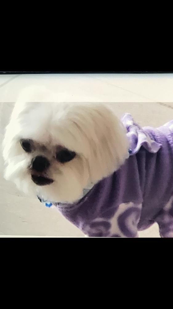 Lost Female Dog last seen Near Margate Blvd & NW 66th Ter, Margate, FL 33063