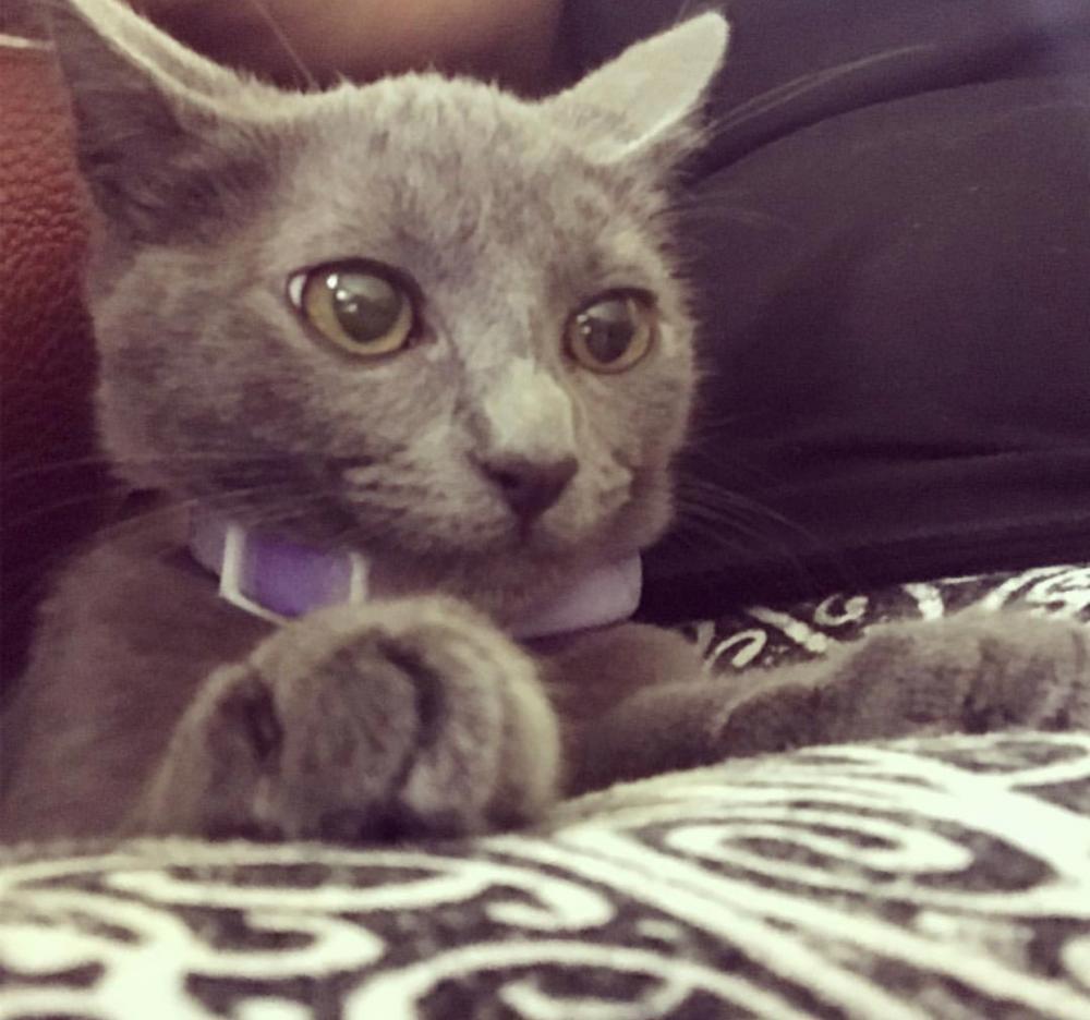 Lost Female Cat last seen Near Hollywood Blvd & N 29th Ave, Hollywood, FL 33020
