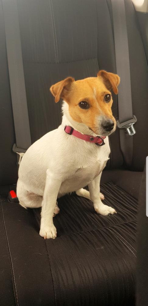 Lost Female Dog last seen Near Taylor St & N 24th Ave, Hollywood, FL 33020