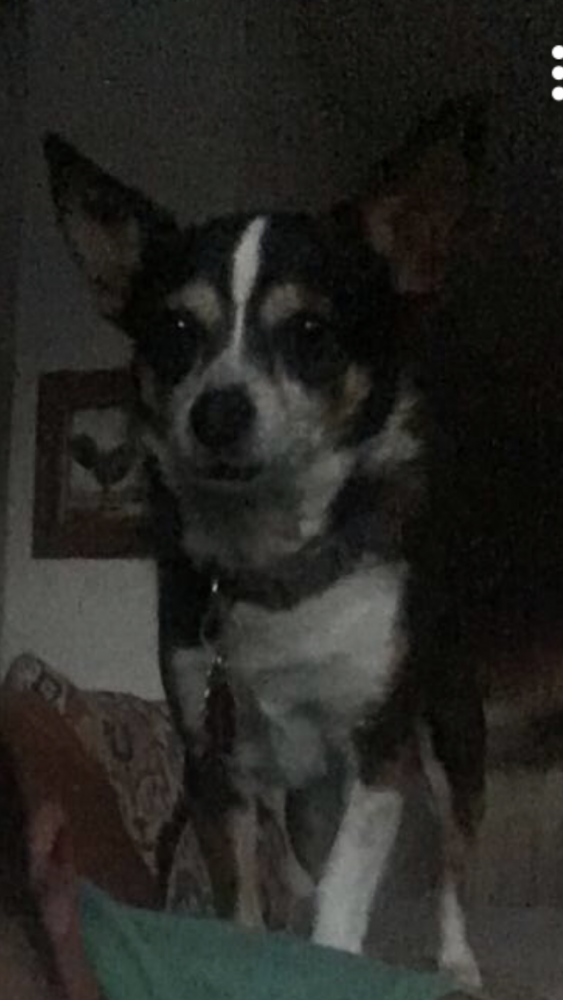 Lost Male Dog last seen Near condor ave and oriole ave, Fontana, CA 92336