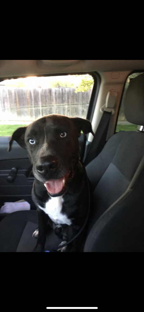 Found/Stray Male Dog last seen Near Coffman St & 8th Ave, Longmont, CO 80501