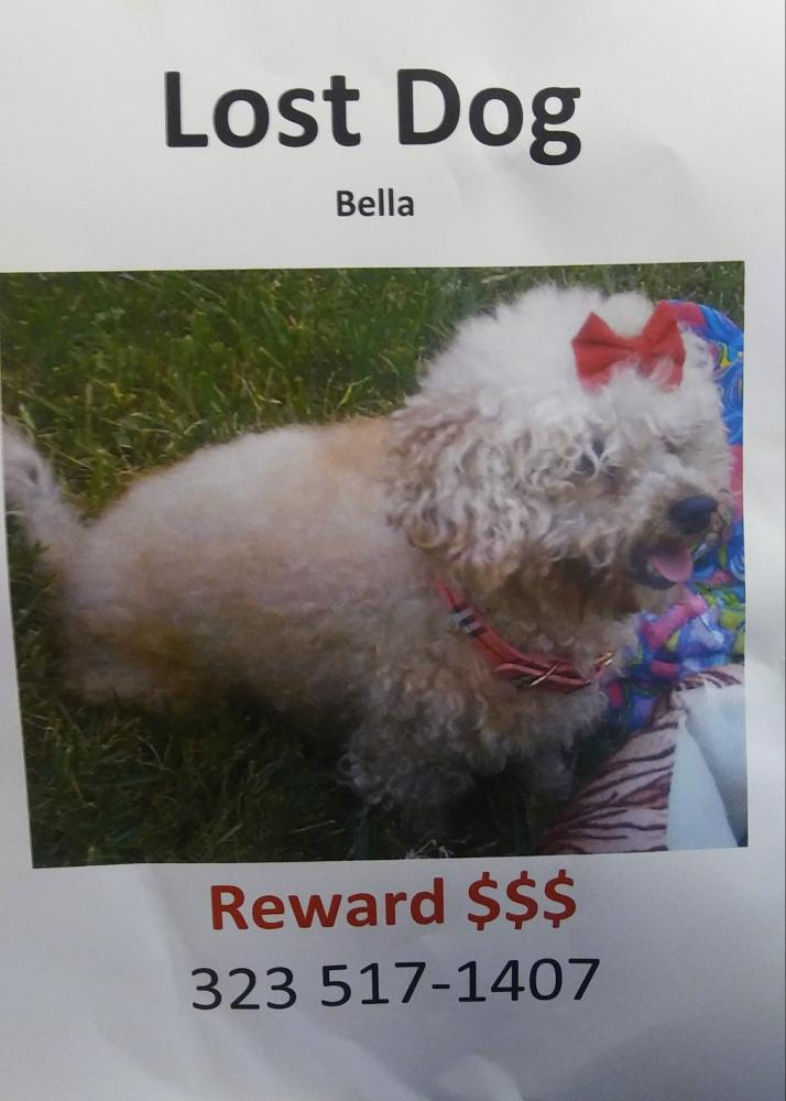 Lost Female Dog last seen Near E Gage Ave & Atlantic Ave, Bell, CA 90201