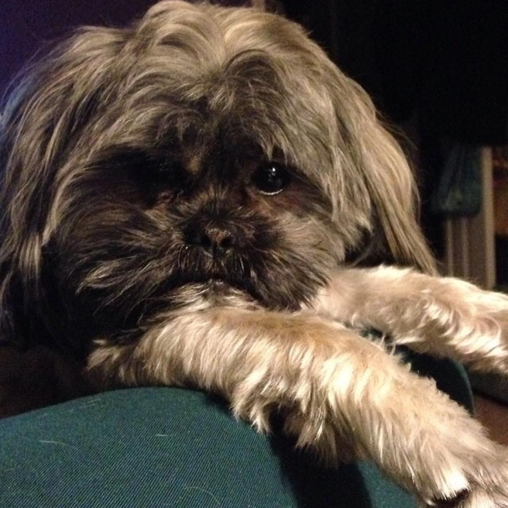 Lost Male Dog last seen Near Bordeau Walk SE & Vineyard Way SE, Smyrna, GA 30082