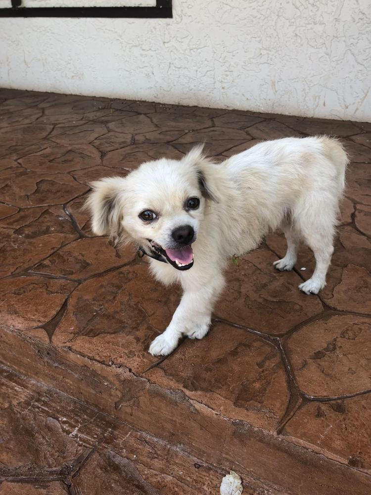 Found/Stray Male Dog last seen Near Riverside Drive and University Drive , Coral Springs, FL 33065