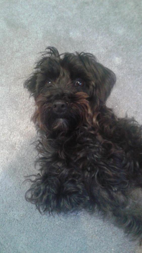 Lost Male Dog last seen Near Park Crest Dr & Park Valley Rd, Montgomery County, MD 20910
