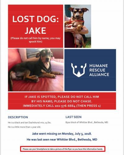 Lost Male Dog last seen Cabin John Regional Park, 7400 Tuckerman Ln, Cabin John, MD  20818, Bethesda, MD 20817