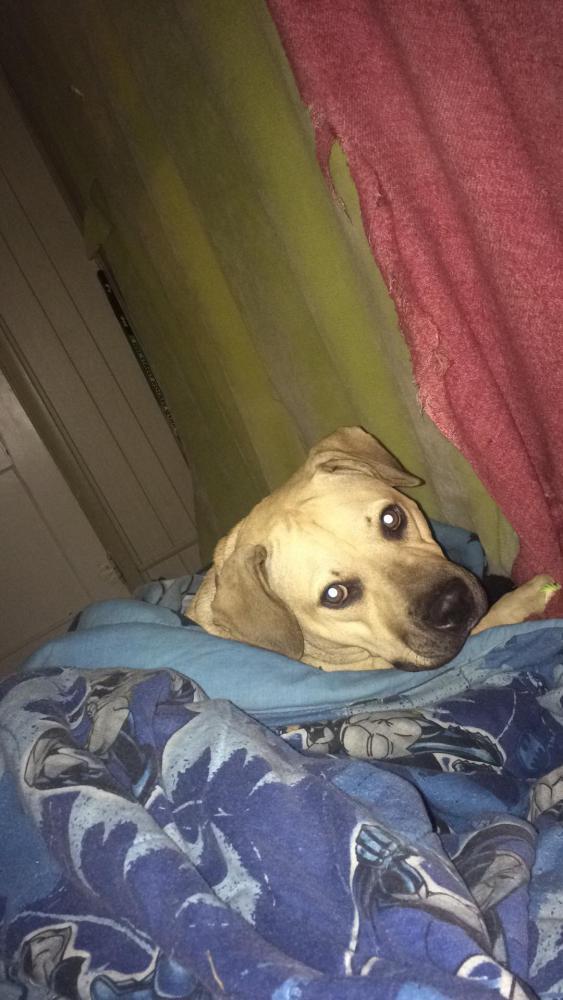 Found/Stray Female Dog last seen Near Broadway St & 3rd Ave, Quantico, VA 22134