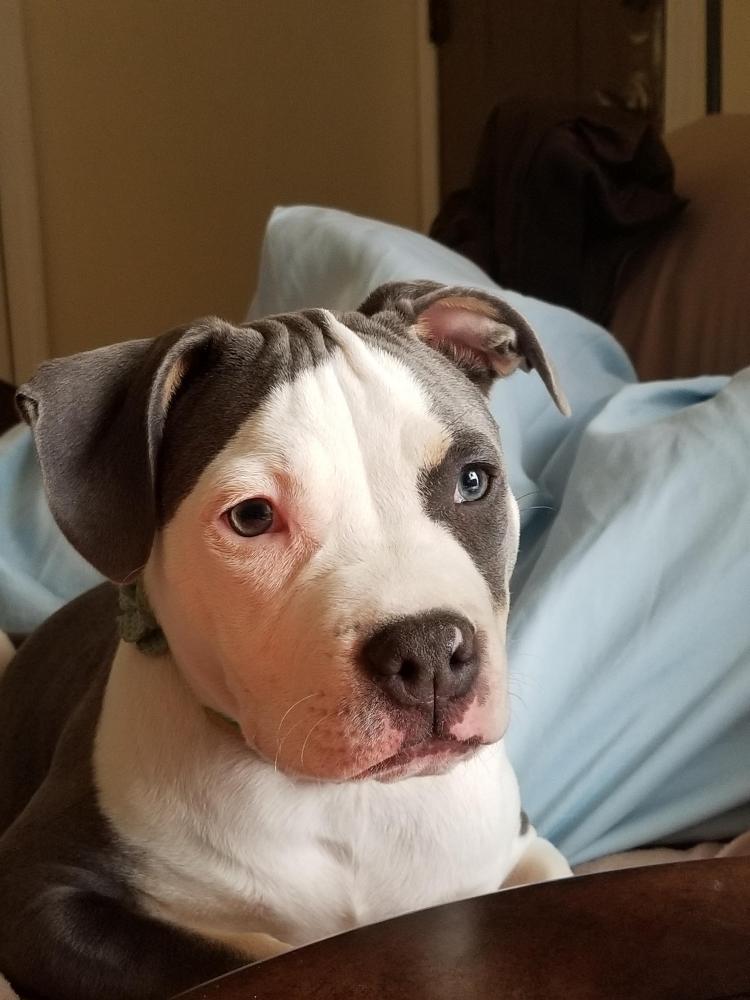 Lost Female Dog last seen Near Logwood Rd & Ashdale Rd, Capitol Heights, MD 20743