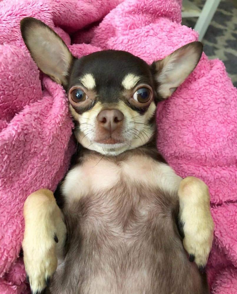 Lost Female Dog last seen Near Ridge Pond Rd  & Summer Tree Road , Centreville, VA 20124