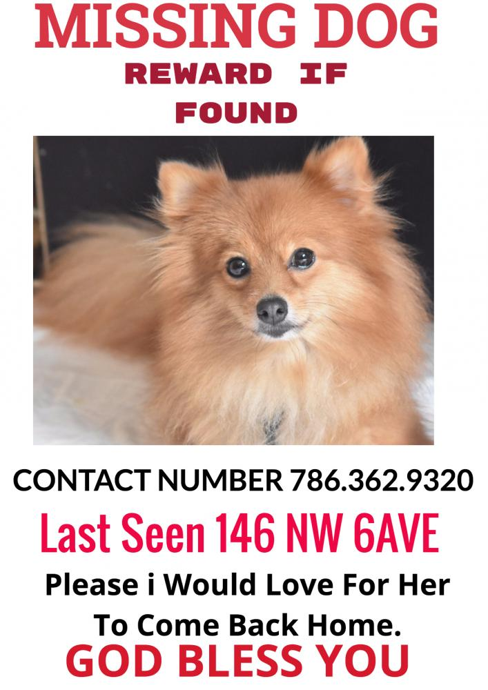 Lost Female Dog last seen Near NW 5th Ave & NW 125th St, North Miami, FL 33168