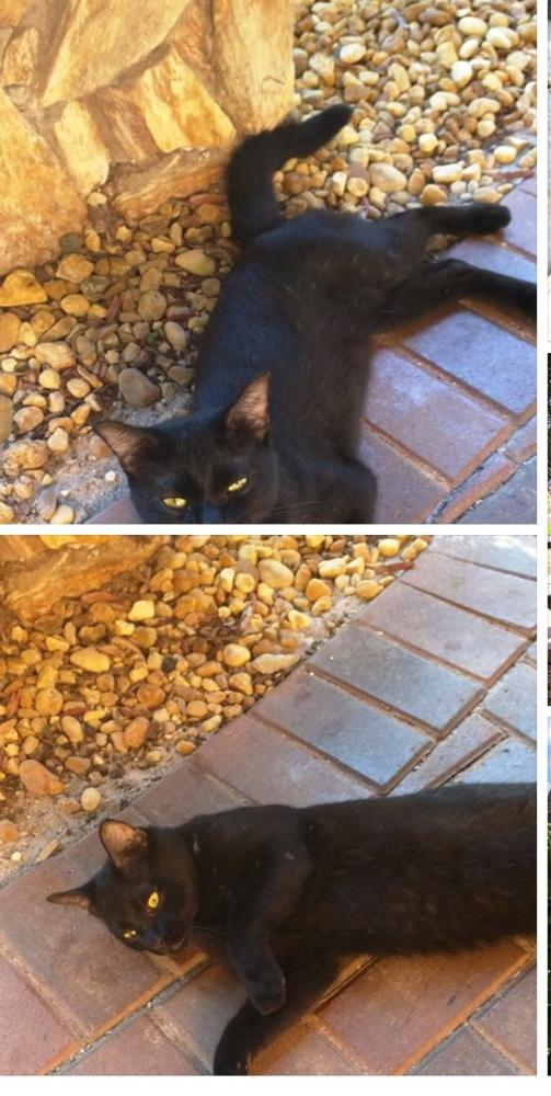 Found/Stray Unknown Cat last seen Not sure, Coral Springs, FL 33065