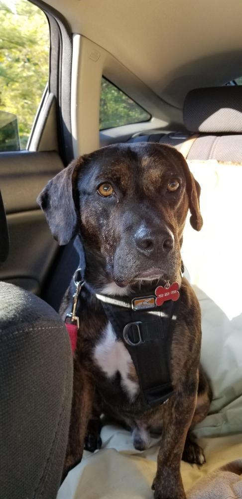 Lost Male Dog last seen Near Rapidan Ln & Emerald Dr, Manassas, VA 20109