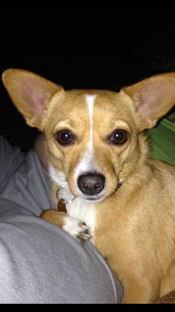 Lost Female Dog last seen Near Lasater Road, Dallas, TX, USA#82, Dallas, TX 75253