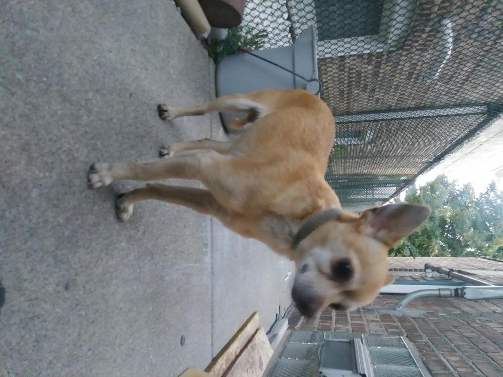 Found/Stray Male Dog last seen Near S Pulaski Rd & W 55th St, Chicago, IL 60629