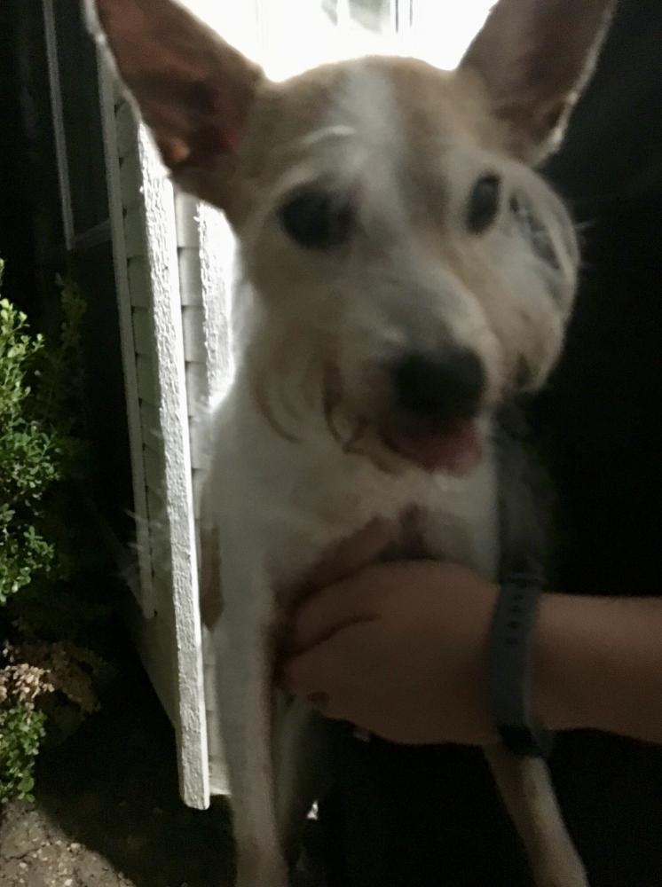 Found/Stray Female Dog last seen Near Viewmont Dr & Ginger Dr, Carrollton, TX 75007
