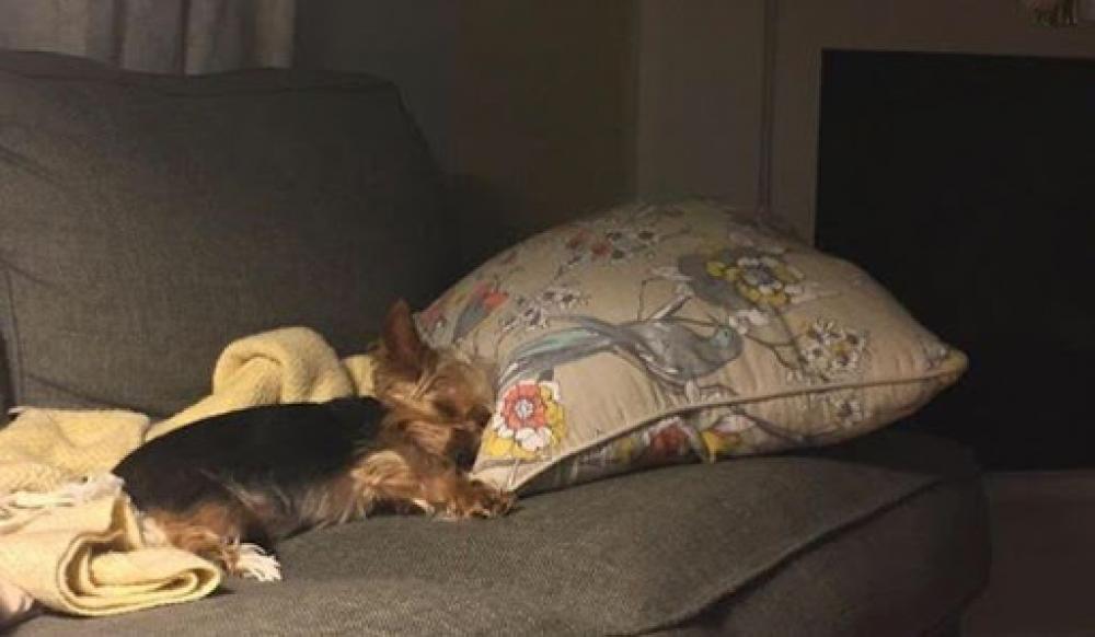 Lost Female Dog last seen Near Granite Hill Drive, Leander, TX, USA, Leander, TX 78641