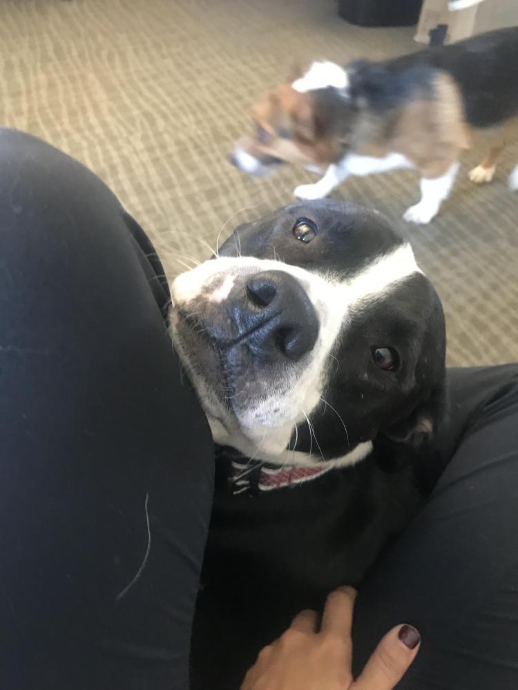 Lost Female Dog last seen Near W 2555 S & 3460 W, West Valley City, UT 84119