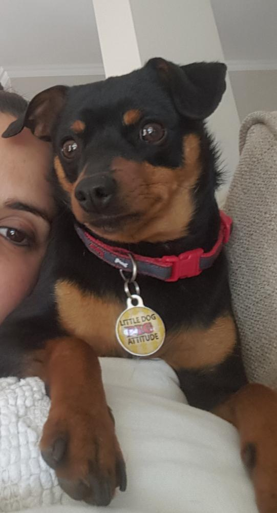 Lost Male Dog last seen Sandpiper Drive, Liefde En Vrede, Johannesburg South, South Africa, Johannesburg South, GP 2190