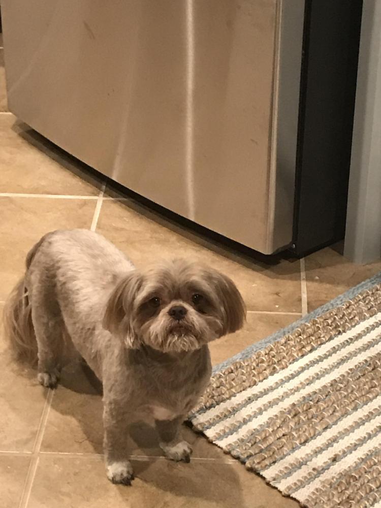 Lost Male Dog last seen Near Tallow Cir & Rosewood Ln, Beaumont, TX 77713