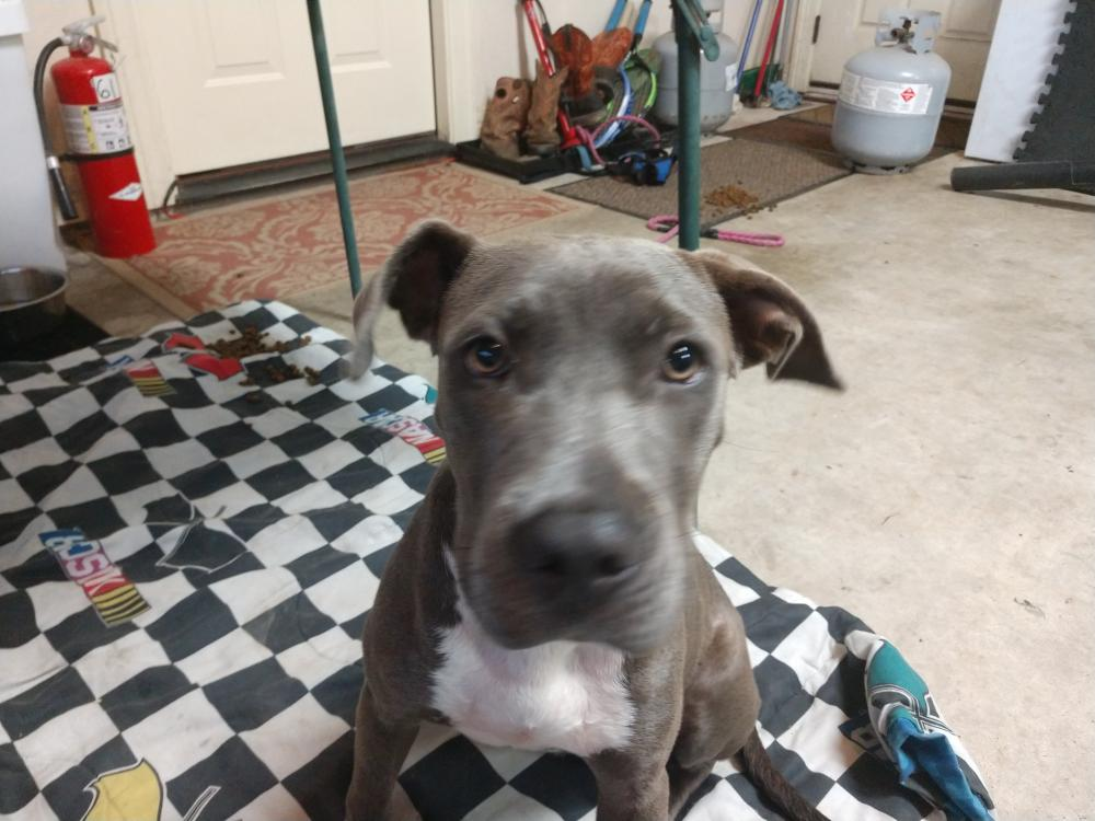 Found/Stray Female Dog last seen Near Allie Payne Rd & MLK, Orange County, TX 77632