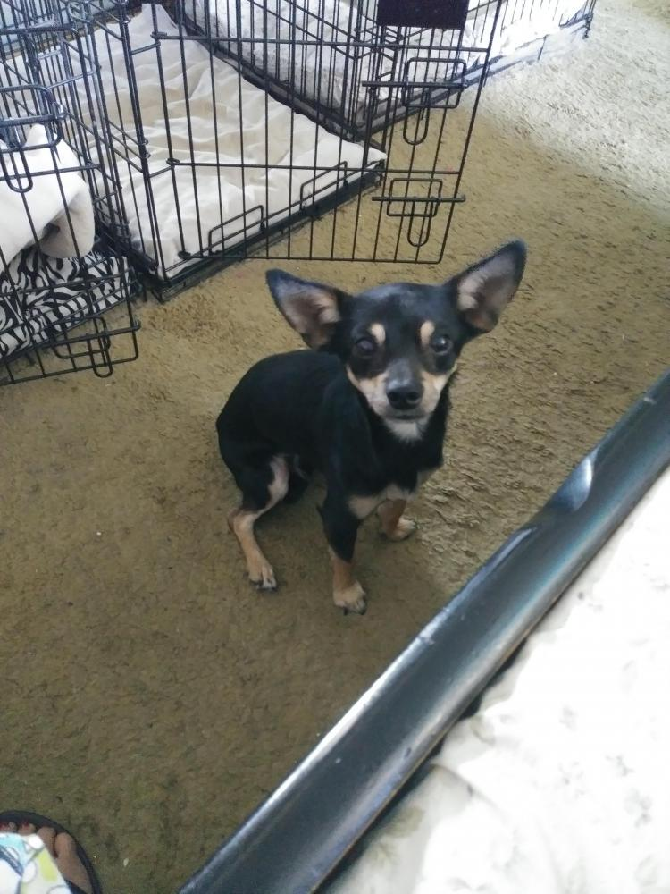 Found/Stray Male Dog last seen Near Tami Pl & E Mesa Vista Ave, Paradise, NV 89120