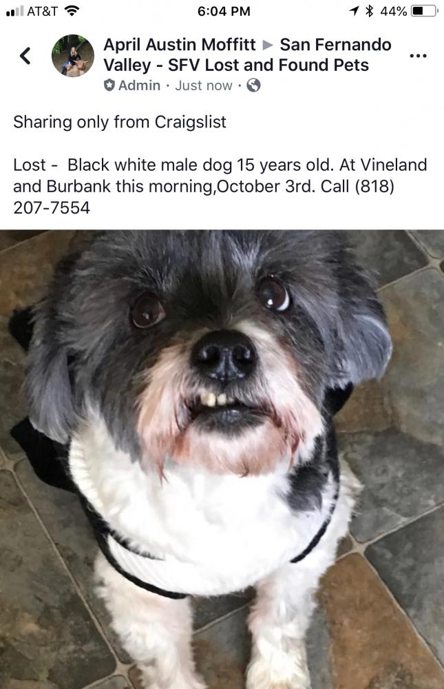Craigslist Lost And Found Pets Los Angeles