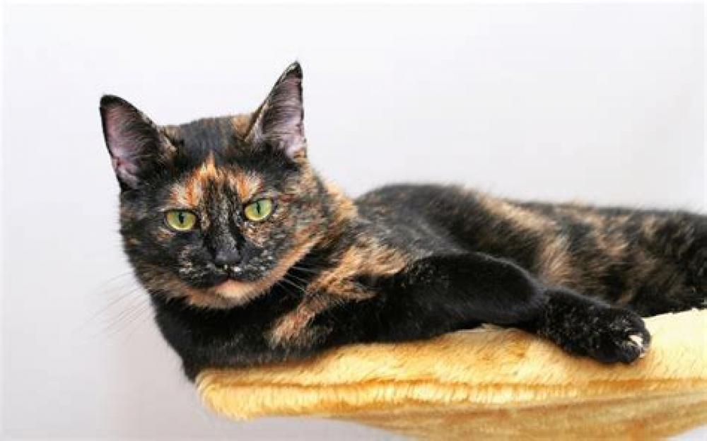 Lost Female Cat last seen Near Miami Beach Dr & Largo Dr, Flint Township, MI 48532