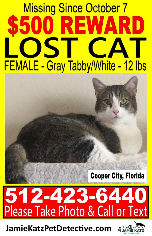 Lost Female Cat last seen Near NW 85 Ave & NW 37 Ct, Cooper City, FL 33024