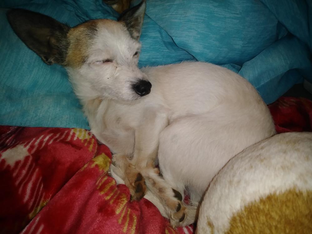 Found/Stray Male Dog last seen Near Harris Ave & Ivy Street, Sacramento, CA 95838