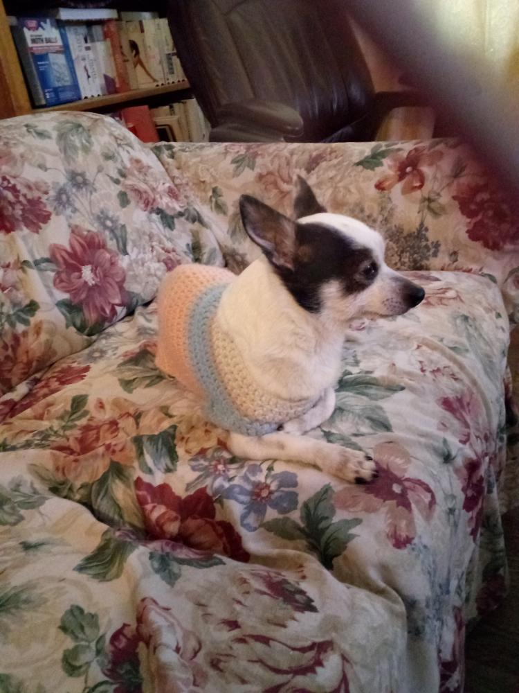 Lost Male Dog last seen Near W Alameda Ave & S Tejon St, Denver, CO 80223