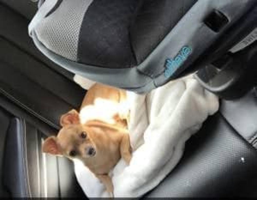 Lost Male Dog last seen Days inn Winnie texas, Winnie, TX 77665