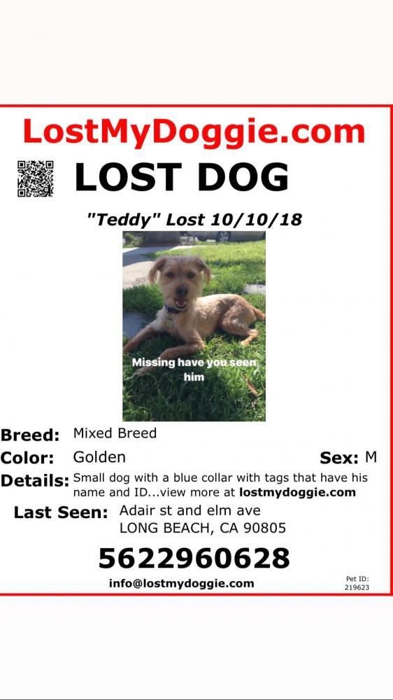 Lost Male Dog last seen Near E Adair St & Jaymills Ave, Long Beach, CA 90805