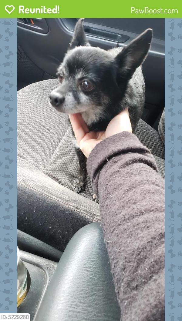 Reunited Male Dog In Tacoma Wa 98444 Id 5229280 Pawboost
