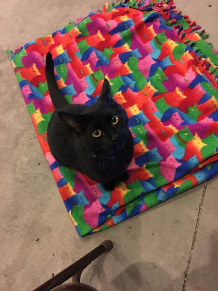 Lost Female Cat last seen Near W 2525 S & S 1800 W, Syracuse, UT 84075