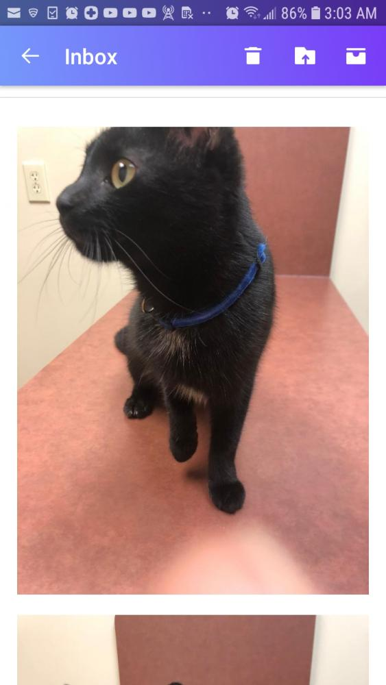 Found/Stray Female Cat last seen Near Springfield Pike & Oliver Rd, Wyoming, OH 45215