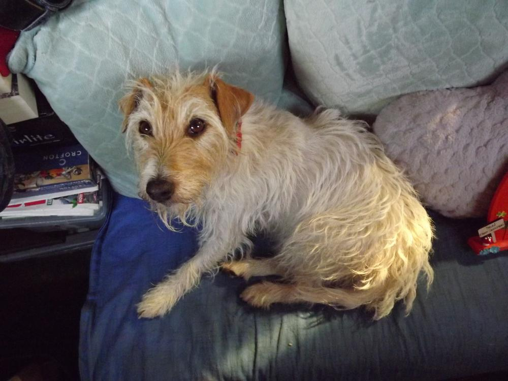 Lost Female Dog last seen Near TINSLEY MARINA, LOCK HOUSE WALK, South Yorkshire, England S9