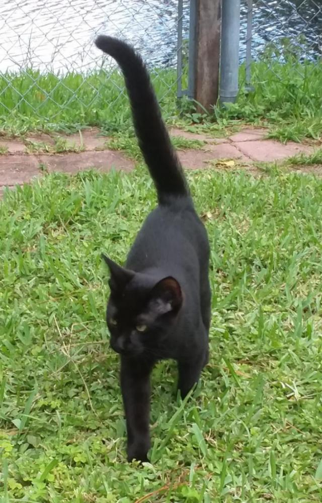 Lost Male Cat last seen Near SW 3rd Street & SW 79 Terrace 33068, Broward County, FL 33068
