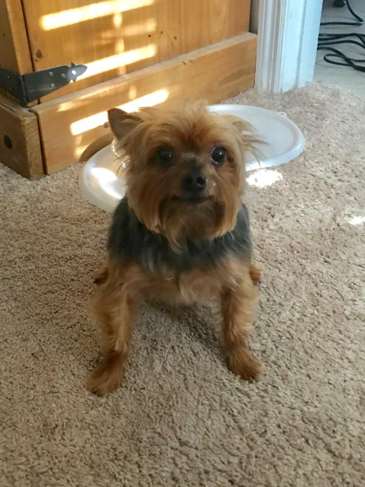 Lost Male Dog last seen Near Crosswinds Drive, Midland, GA, USA, Columbus, GA 31820