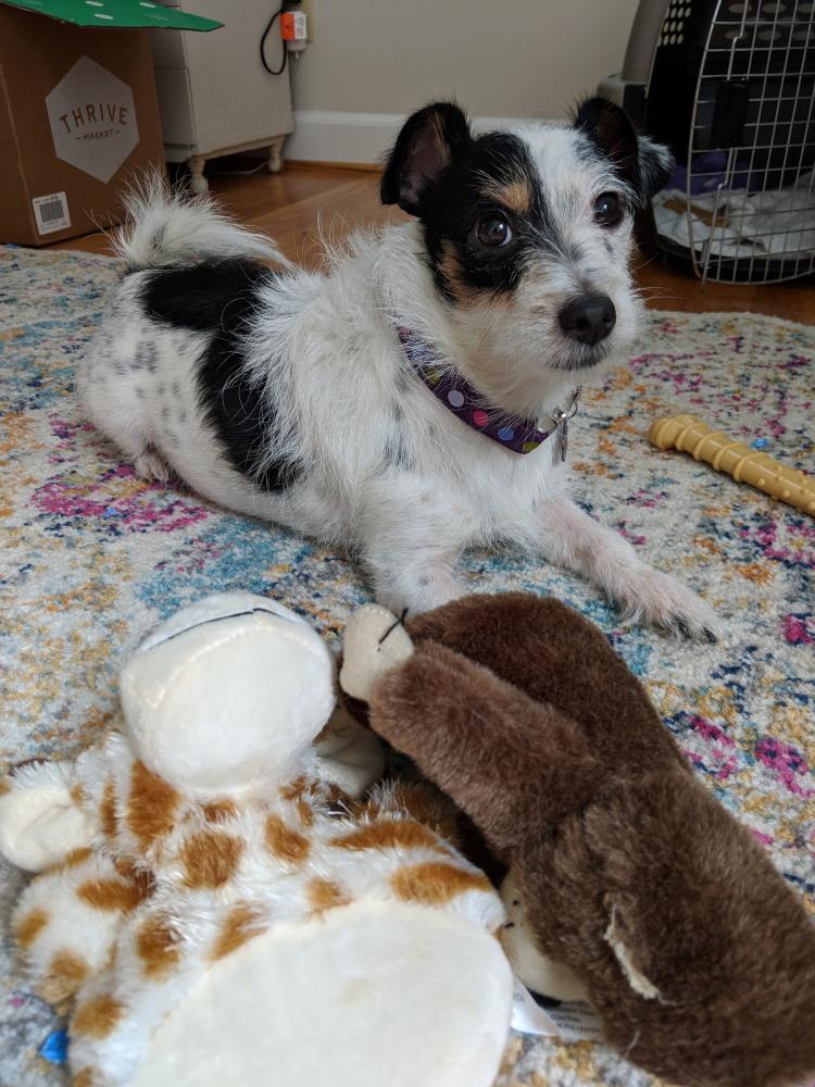 Lost Female Dog last seen Near Fancy Gap Hwy & Plantation Dr, Cana, VA 24317