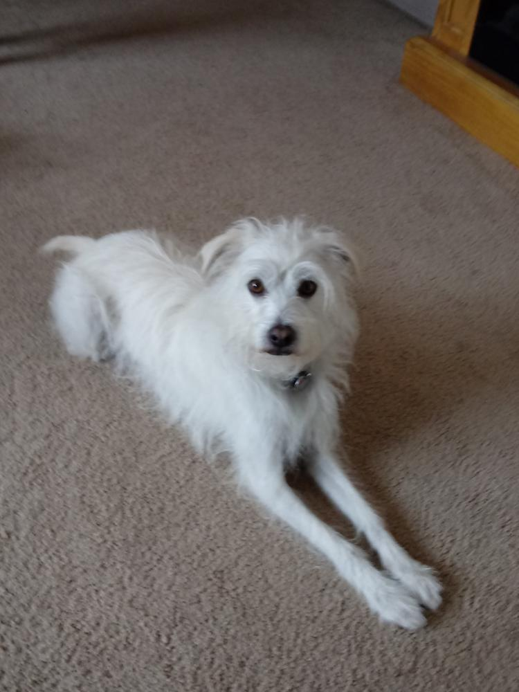 Lost Male Dog last seen Near 21st Ave S & S 316th St, Federal Way, WA 98003