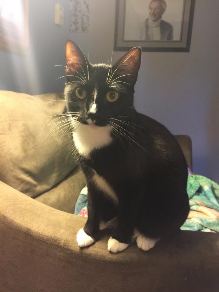Lost Female Cat last seen Near N Davis St & Sherwood Ln, Missoula, MT 59801