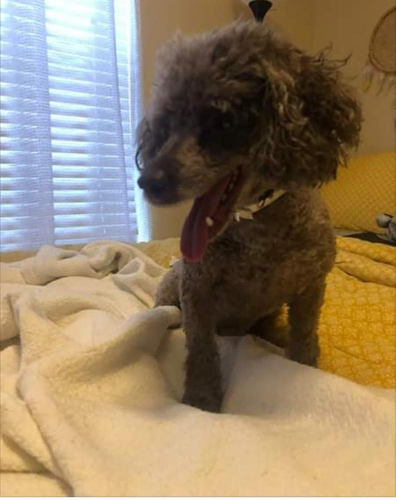 Lost Found Dogs Cats And Pets In Memphis Tn 38118
