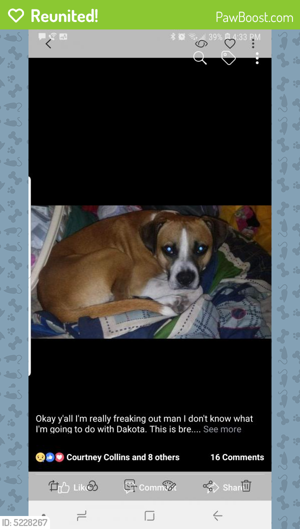 Reunited Male Dog last seen Near Pipkin St & Park St, Beaumont, TX 77705