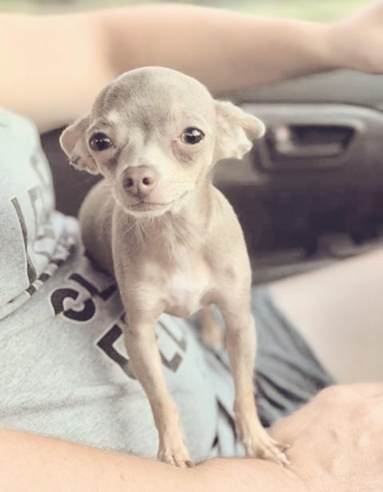 Lost Male Dog last seen Near fm Rd 1663 & I-10, Winnie, TX 77665