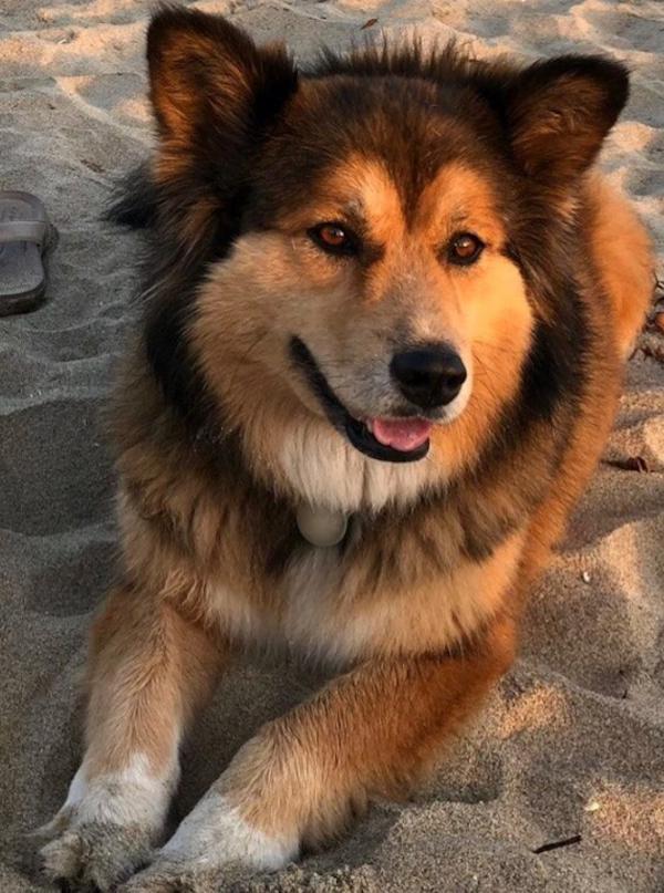 Lost Female Dog last seen Near W Washington Blvd & S Manhattan Pl, Los Angeles, CA 90018