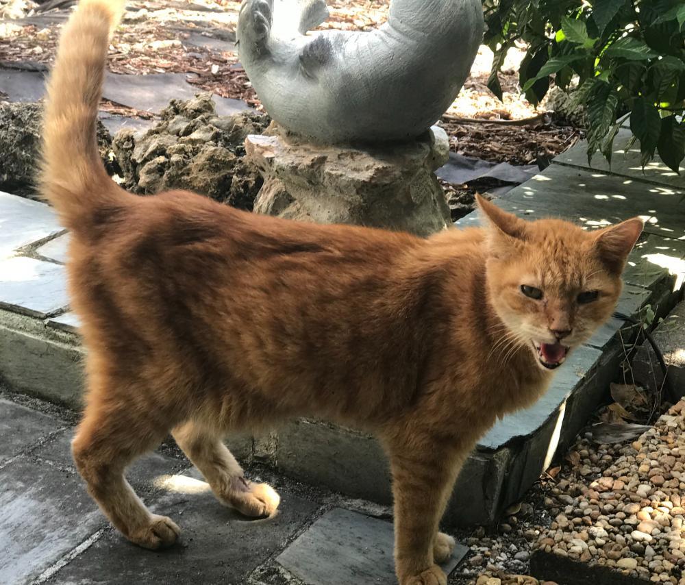 Found/Stray Unknown Cat last seen Near SE 6th St & S Riverside Dr, Pompano Beach, FL 33062