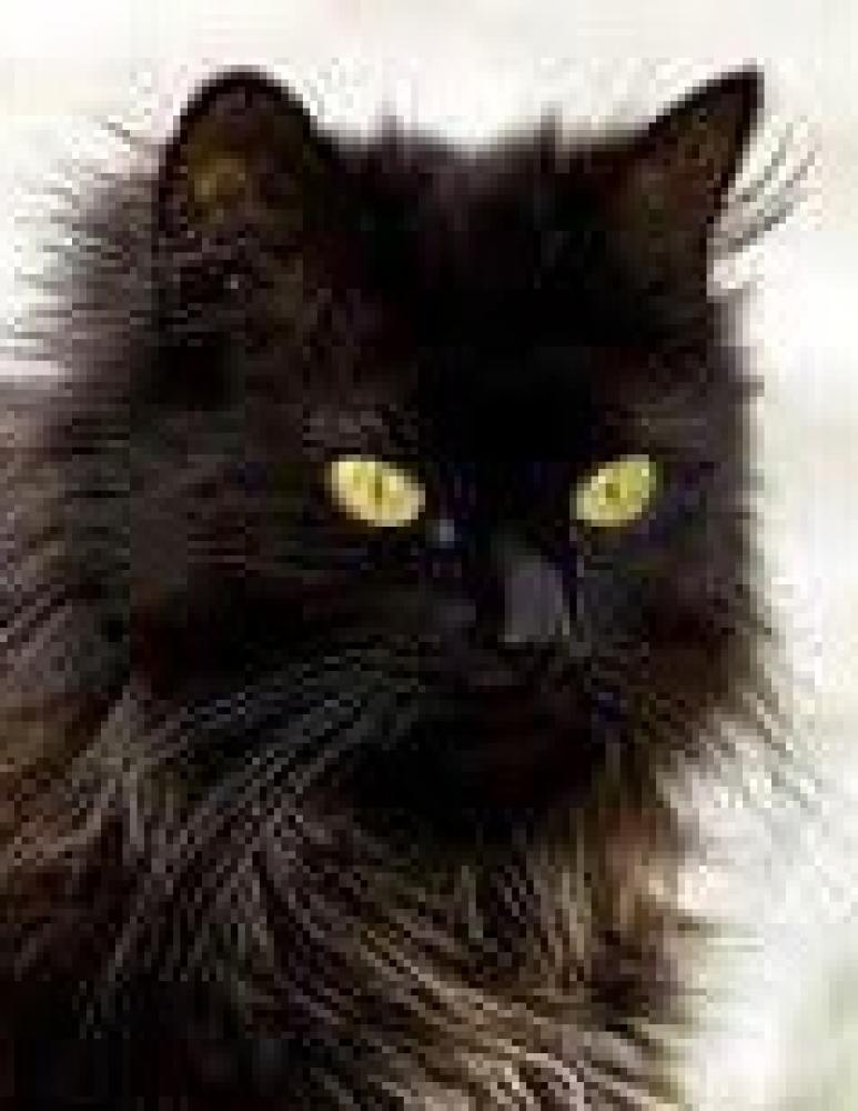 Lost Female Cat last seen Near S Walnut St & Nebraska St, Bethalto, IL 62010